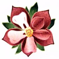 Logo for Dr. Gerald J. Brown, DDS