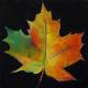 Maple Leaf Wellness